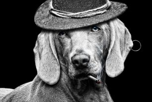 Dog smoking with hat and earring